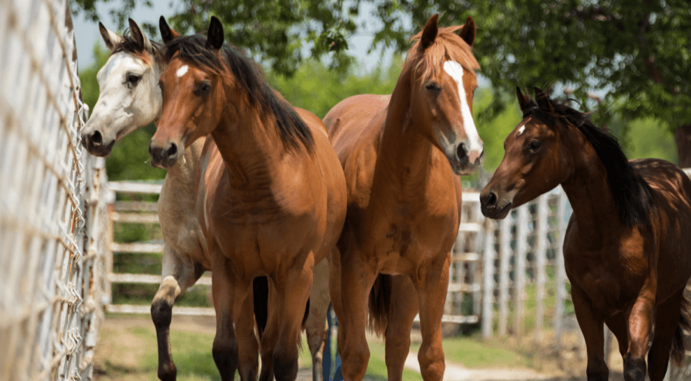 To reduce stress for horses and ensure their comfort, consider these tips.