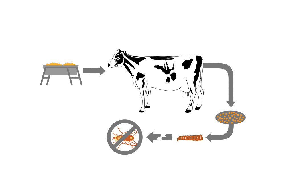 Feed Through 101: How do Larvicides Work?